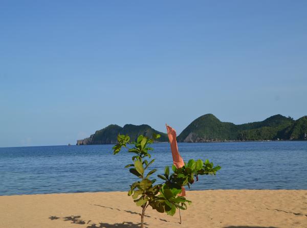 Sacahon Beach Catanduanes Bicol
